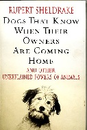 .Dogs_That_Know_When_Their_Owners_are_Coming_Home.