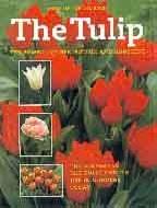.The_Tulip.