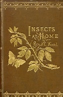 .Insects_at_home.